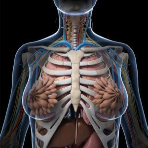 Técnico Superior en Anatomía, Patológica y Citológica
